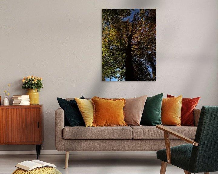 Sfeerimpressie: Beuk in herfst met verkleurde bladeren van Timon Schneider