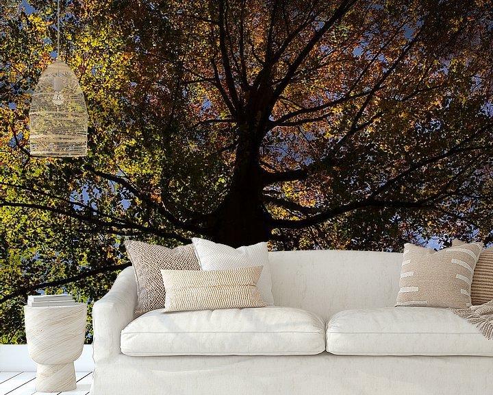 Sfeerimpressie behang: Beuk in herfst met verkleurde bladeren van Timon Schneider