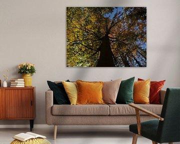 Oude boom met verkleurde bladeren in de herfst vanuit kikkerperspectief van Timon Schneider