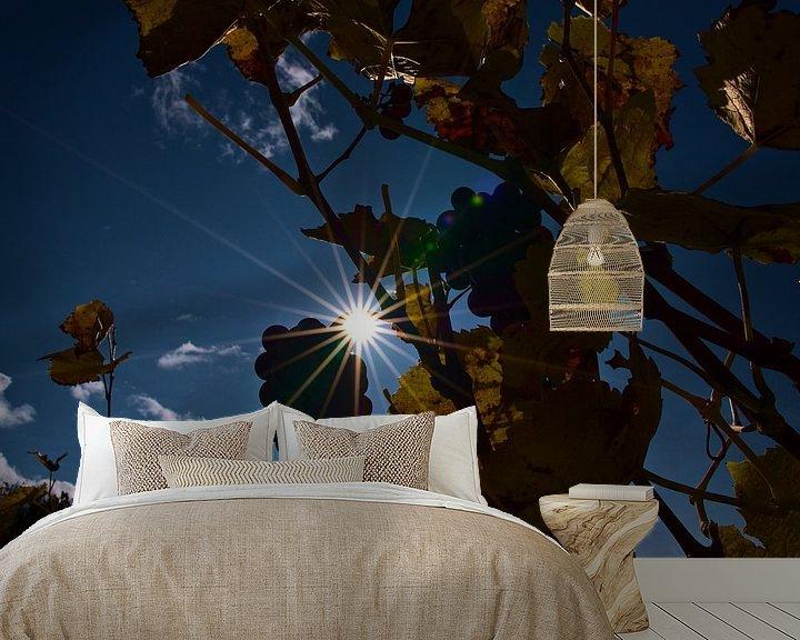 Sfeerimpressie behang: Zon schijnt door wijnranken met verkleurde bladeren en rijpe druiven voor ijswijn in de herfst van Timon Schneider