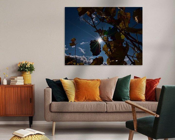 Sfeerimpressie: Zon schijnt door wijnranken met verkleurde bladeren en rijpe druiven voor ijswijn in de herfst van Timon Schneider
