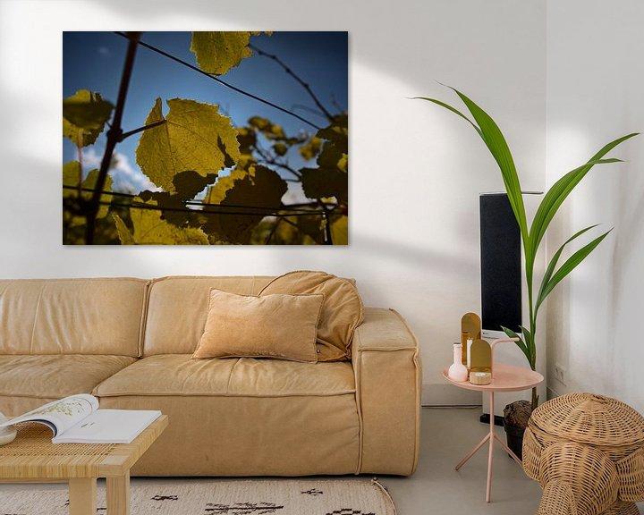Sfeerimpressie: Close up van een wijnstok met geel verkleurde bladeren in de herfst van Timon Schneider
