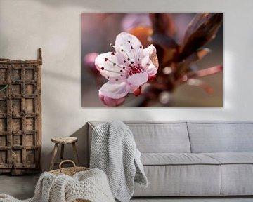 Cherry Blossom Bud van Kurt Krause
