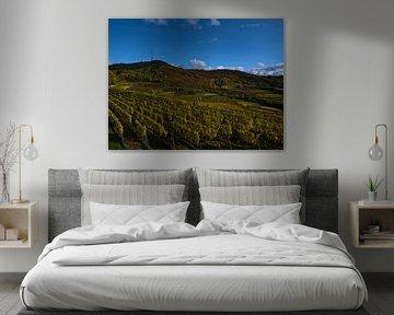 Panoramablick über die Weinbergterrassen des Kaiserstuhls im Herbst von Timon Schneider