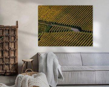 Croisement d'un chemin sur un vignoble avec des vignes jaunes parallèles en automne sur Timon Schneider