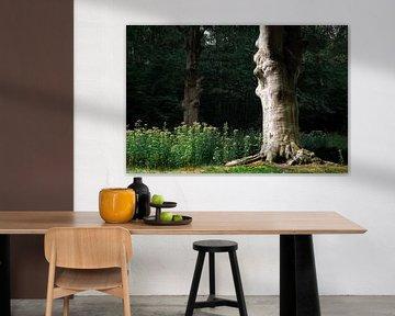 Schöner alter Baum im Wald von Evelien Oerlemans