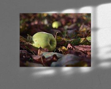 Une pomme verte mûre gît sur le sol entre des feuilles décolorées sur Timon Schneider