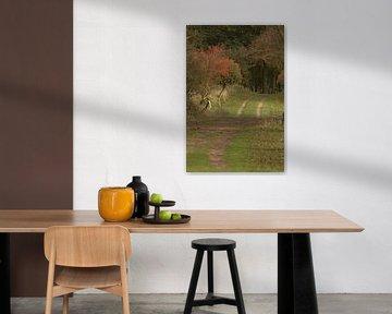 Karrespoor in herfstkleuren van Nella van Zalk