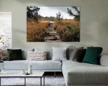 wandelpad in natuurgebied gilderhauser venn van Compuinfoto .