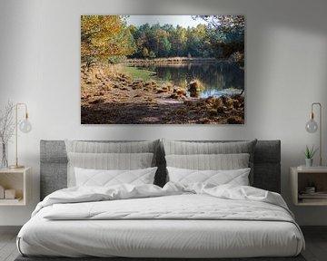 meertje in de natuur bij gildehaus van Compuinfoto .