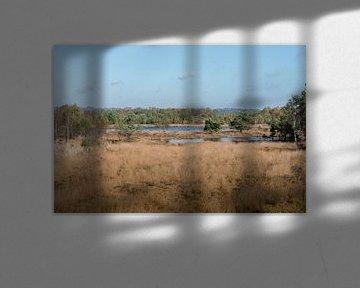 het gilderhauser venn natuur en wandelgebied van Compuinfoto .