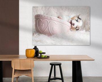 Australischer Schäferhund Welpe in rosa Schale von Cindy Van den Broecke