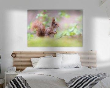 Eichhörnchen mit Pferdeschwanz von Cindy Van den Broecke