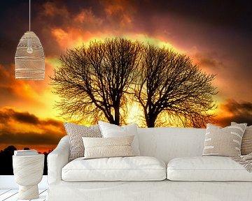 Witte kastanjebomen van Wim van Beelen