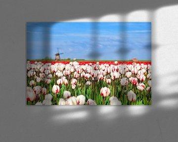 Spring colors von Olha Rohulya