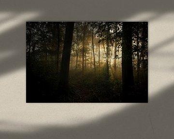 zonsondergang in het bos van Karin vanBijleveltFotografie