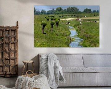 koeien in de wei langs sloot met knotwilgen in de bernisse van Compuinfoto .