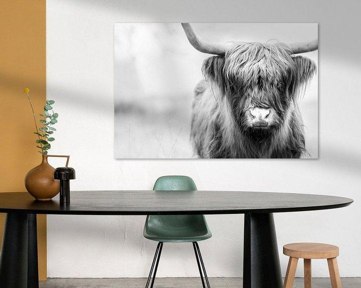 Impression: Highlander écossais sur GoWildGoNaturepictures