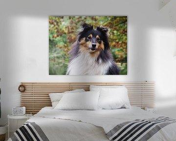Porträt eines Sheltie-Hundes von Moniek Op den Camp