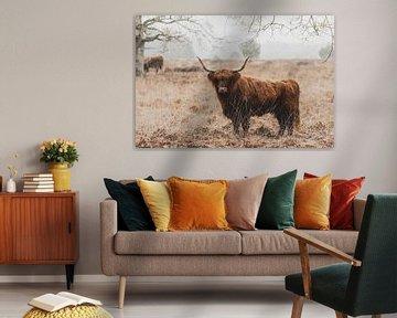 Schotse Hooglanders van GoWildGoNaturepictures