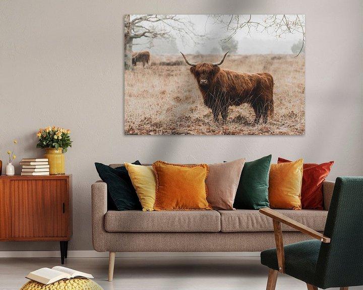 Sfeerimpressie: Schotse Hooglanders van GoWildGoNaturepictures