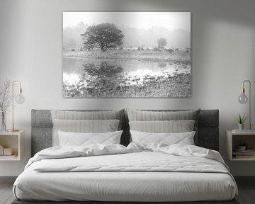Hasselsvennen Leenderbos en noir et blanc sur GoWildGoNaturepictures