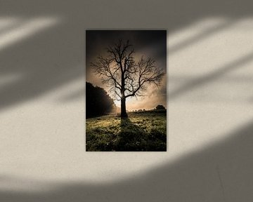 Leafless tree in front of sunrise van Boy  Driessen