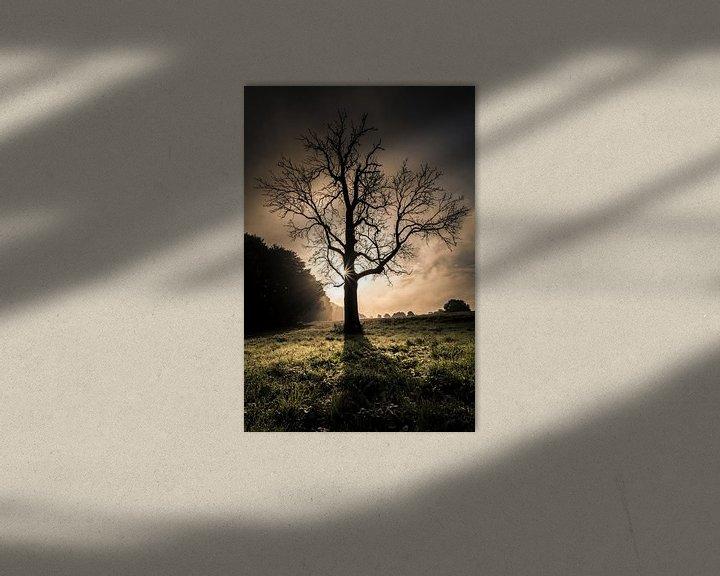 Impression: Leafless tree in front of sunrise sur Boy  Driessen