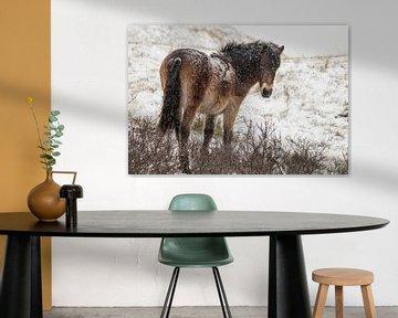 Wild paard in de sneeuw van Sanne Groen