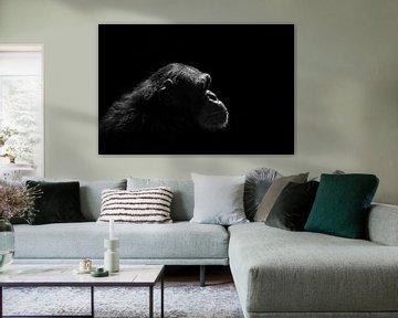Schimpanse Silhouette von FotovanHenk