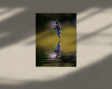Besucher am  Gartenteich - Plattbauch Libelle von Christine Nöhmeier