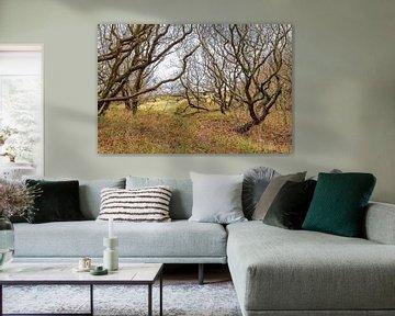 Knoestige bomen aan de Noordzeekust van Achim Prill