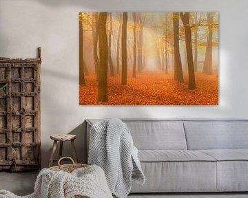 Pad door een mistig beukenbos landschap tijdens de herfst van Sjoerd van der Wal