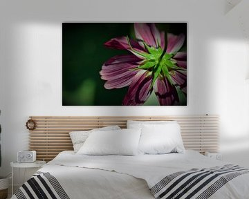 Rückseite Blume von Dorien Boekema