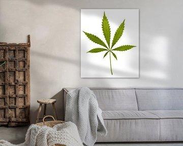 Cannabisblatt von Achim Prill