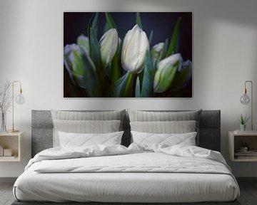 Tulpen von Consala van  der Griend
