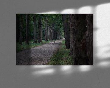 overstekende hertjes in het bos van Jeroen Franssen