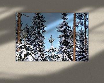 Fir in Lapland von Christer Andersson
