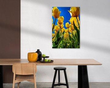 Gele tulpen onder een strak blauwe lucht van Freek van Oord