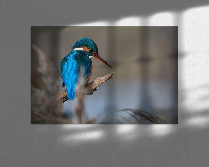 Impression: Martin-pêcheur sur IJsvogels.nl - Corné van Oosterhout