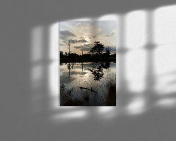 Reflectie in een ven