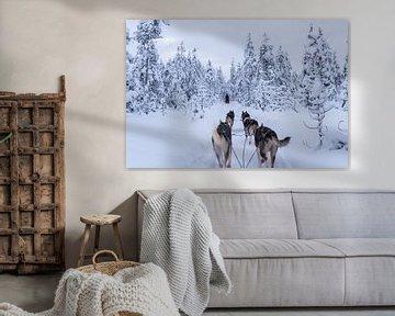 Der Winter kommt. von Patrick Vercauteren