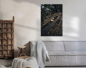Paddenstoelen in boom van Colin van Wijk