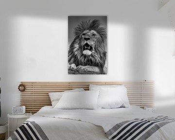Zwart wit leeuw van Saskia Hoks