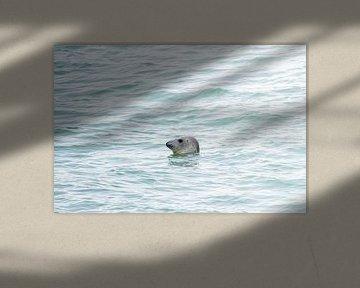 Seehund an der Brouwersdam-Schleuse von Merijn Loch