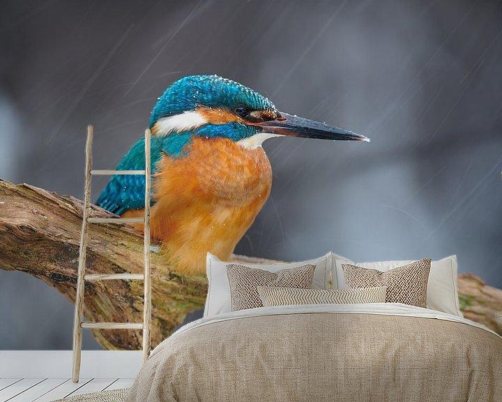Beispiel fototapete: Eisvogel trotzt Schneesturm von IJsvogels.nl - Corné van Oosterhout
