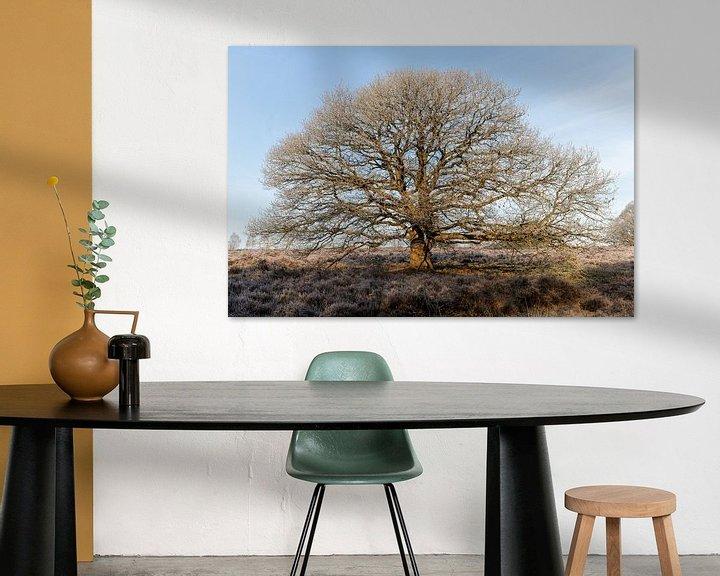 Impression: Un bel arbre et le gel hivernal sur Anjo ten Kate