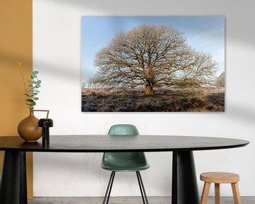 Ein schöner Baum und Winterfrost