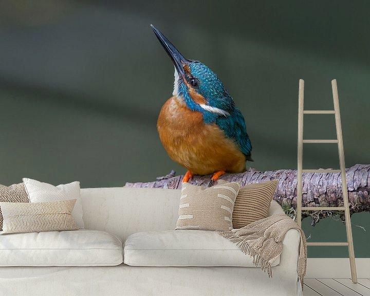 Sfeerimpressie behang: IJsvogel mannetje van Paul Weekers Fotografie