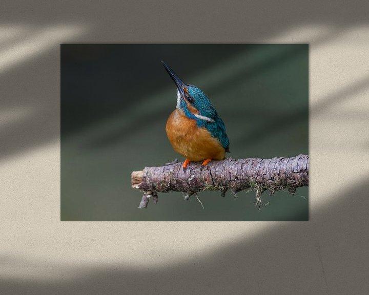 Sfeerimpressie: IJsvogel mannetje van Paul Weekers Fotografie